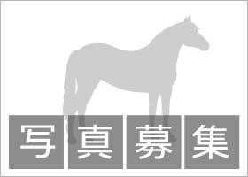https://db.netkeiba.com/?pid=picture&type=o&id=8161.jpg
